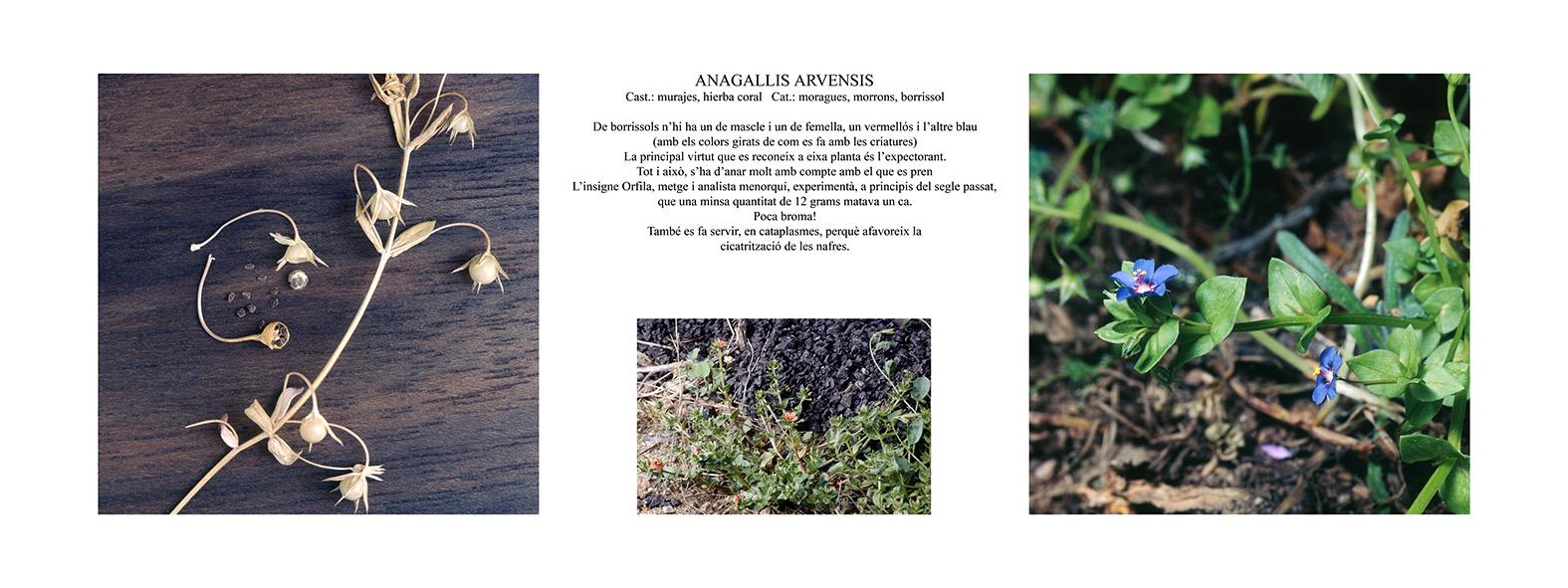Pep Bonet Capellá-Botánica-Semillas-Macro fotografía (1)