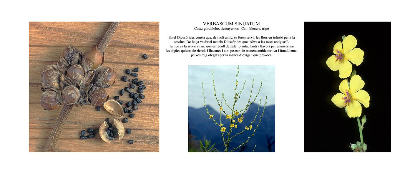 Pep Bonet Capellá-Botánica-Semillas-Macro fotografía (11)