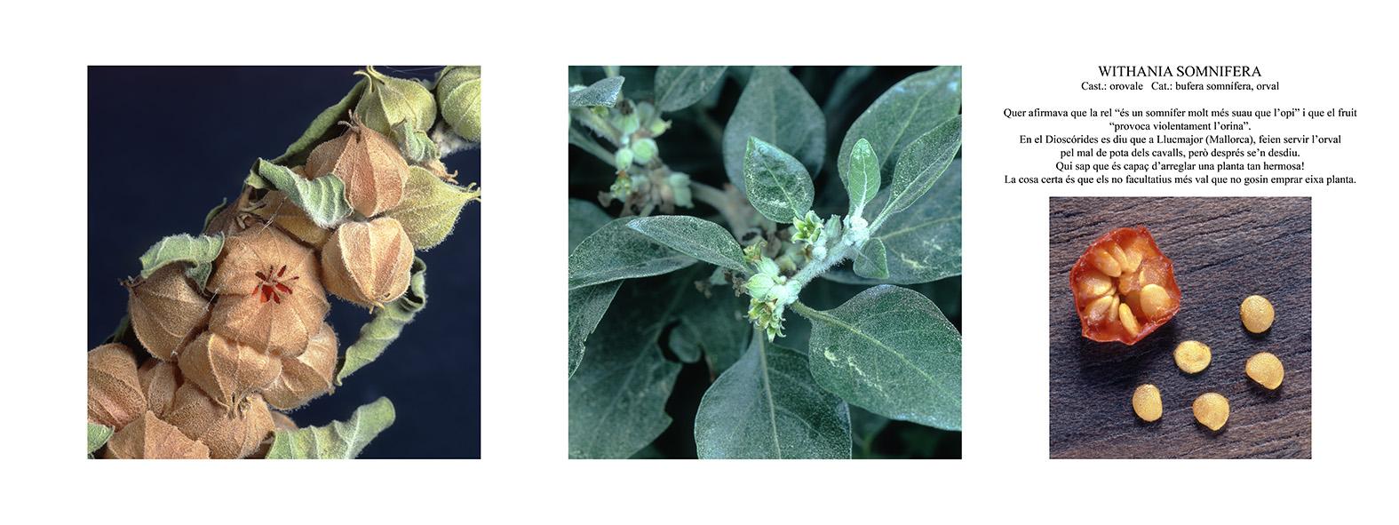 Pep Bonet Capellá-Botánica-Semillas-Macro fotografía (12)
