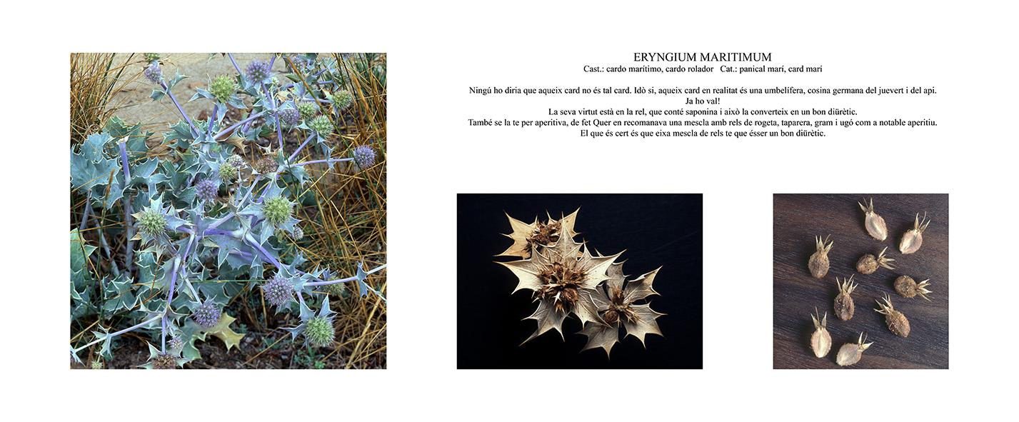 Pep Bonet Capellá-Botánica-Semillas-Macro fotografía (4)