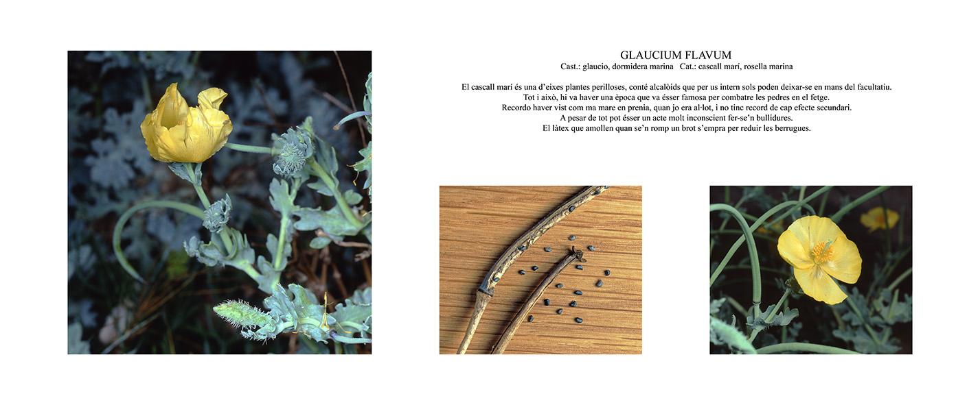 Pep Bonet Capellá-Botánica-Semillas-Macro fotografía (5)