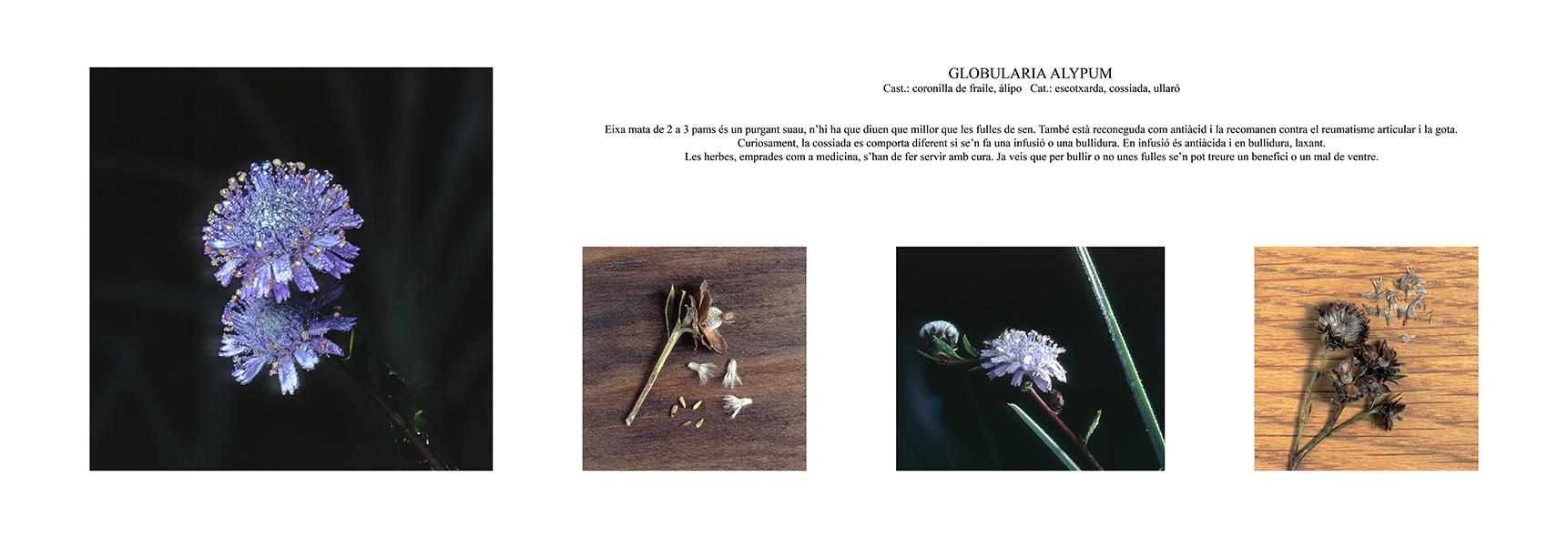 Pep Bonet Capellá-Botánica-Semillas-Macro fotografía (6)