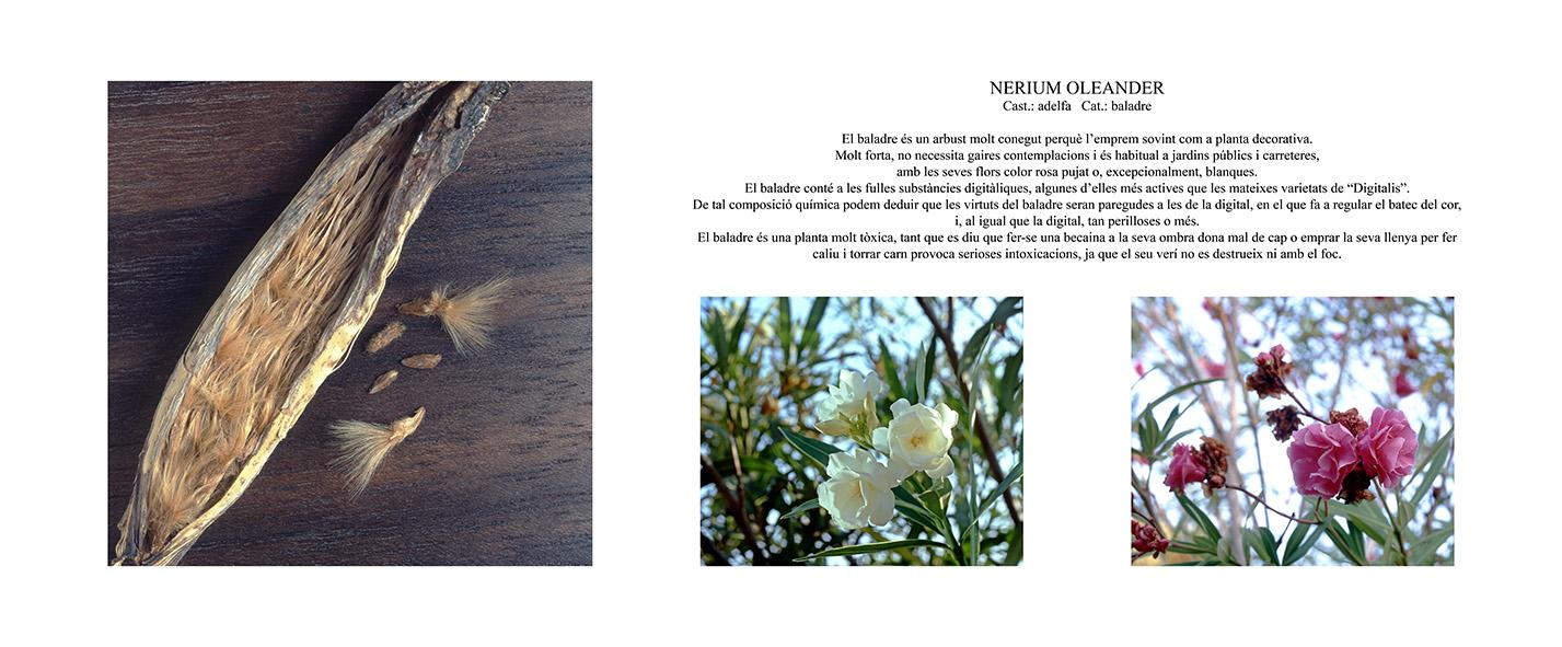 Pep Bonet Capellá-Botánica-Semillas-Macro fotografía (7)