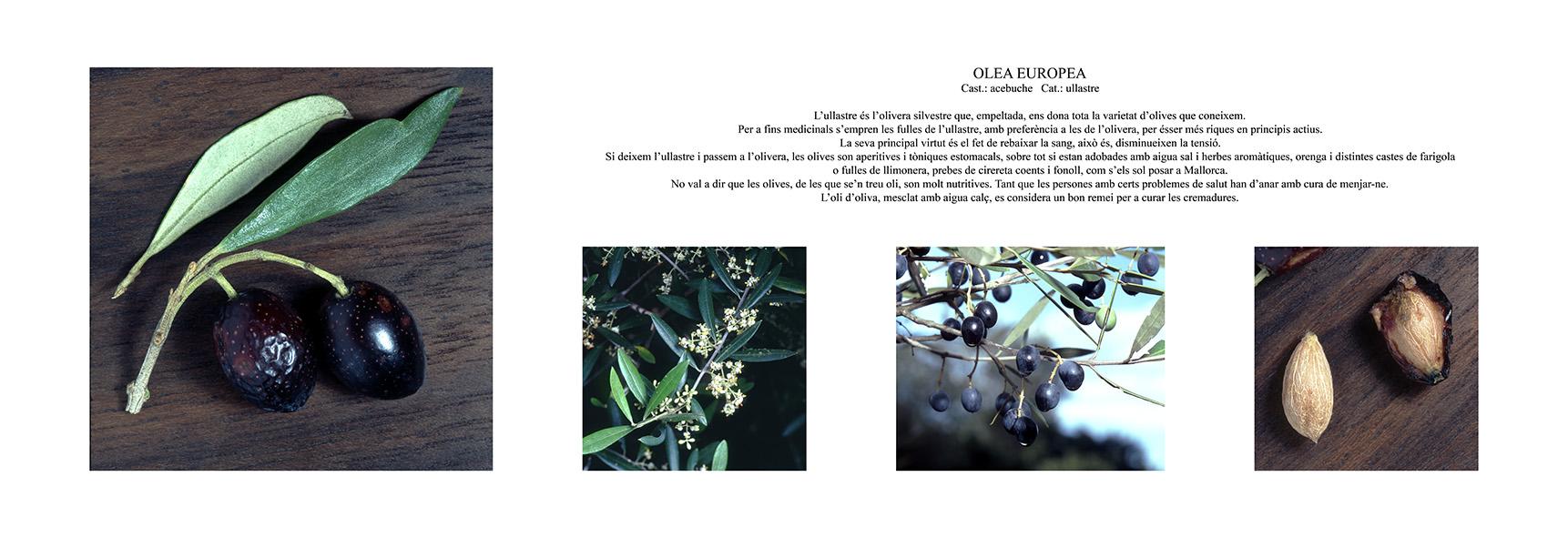 Pep Bonet Capellá-Botánica-Semillas-Macro fotografía (8)