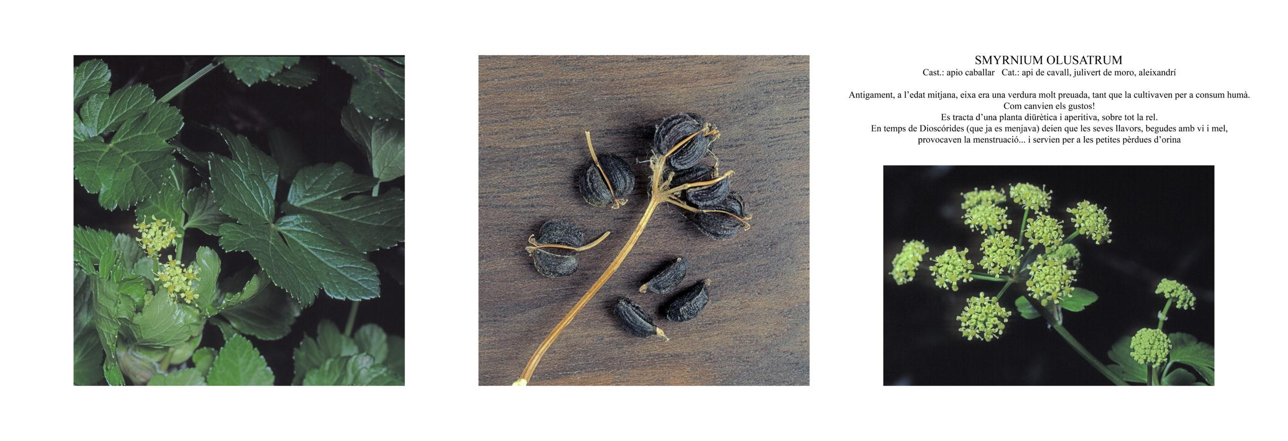 Pep Bonet Capellá-Botánica-Semillas-Macro fotografía (9)