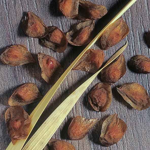 Pep Bonet Capellá-Frutos y semillas-Fotografía botánica (2)