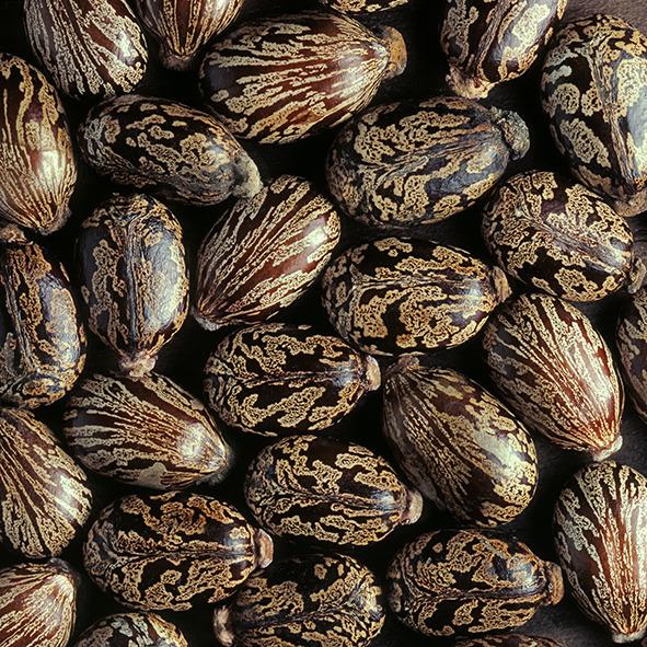 Pep Bonet Capellá-Frutos y semillas-Fotografía botánica (26)