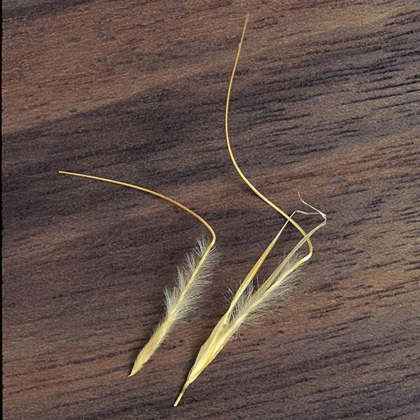 Pep Bonet Capellá-Frutos y semillas-Fotografía botánica (28)