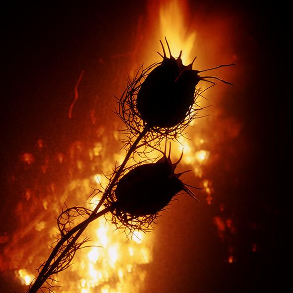 Pep Bonet Capellá-Frutos y semillas-Fotografía botánica (34)