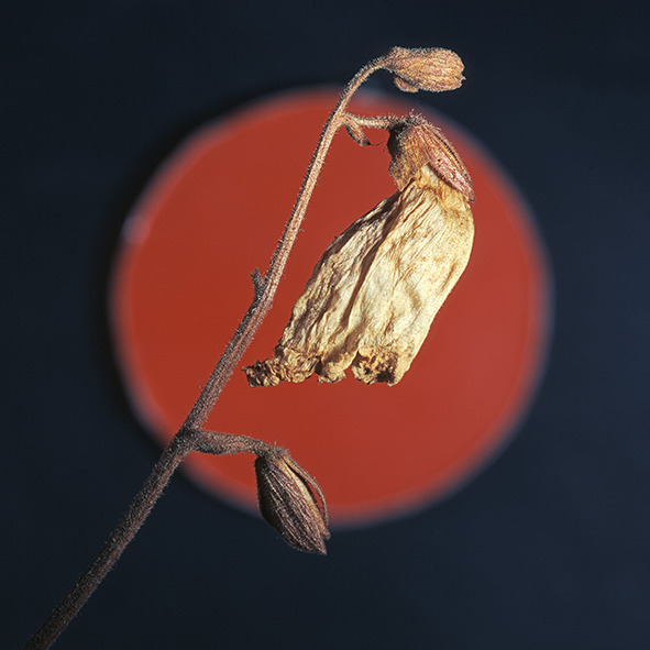 Pep Bonet Capellá-Frutos y semillas-Fotografía botánica (8)