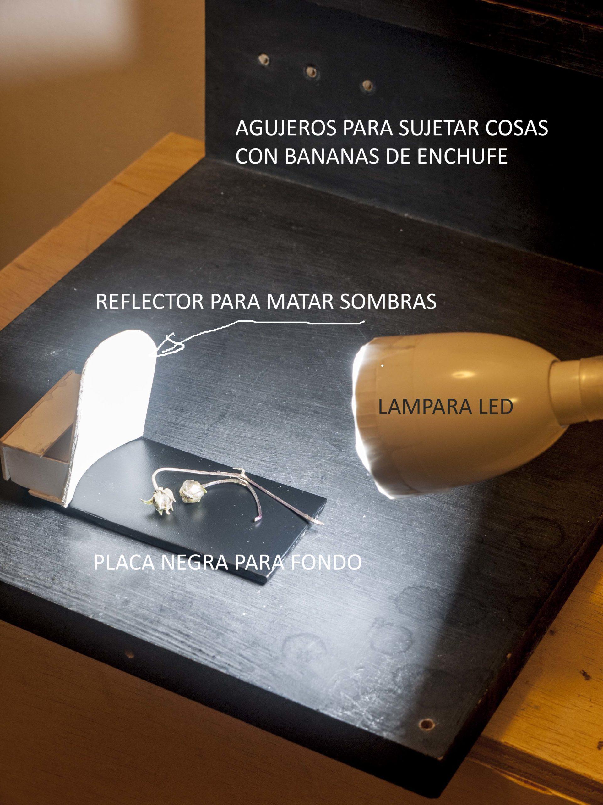Pep Bonet Capellá-Macro fotografía-Técnica fotofráfica (4)